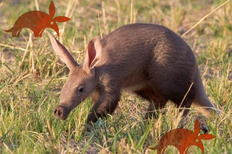 Ubuntu 17 Artful Aardvark